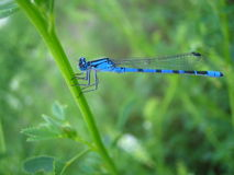 Belle demoiselle Photos stock