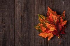 Belle di foglie di autunno colorate multi Immagine Stock Libera da Diritti