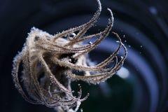 Belle erbe secche in acqua Fotografia Stock