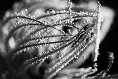 Belle erbe secche in acqua Immagine Stock