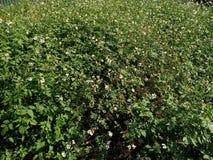 Belle et attrayante herbe verte images libres de droits
