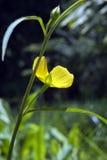 Belle et exagérée fleur jaune micro Image libre de droits