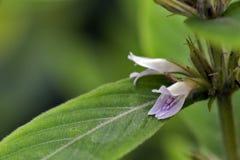 Belle et exagérée fleur pourpre micro Images libres de droits