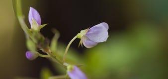 Belle et exagérée fleur pourpre micro Image libre de droits