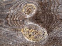 Belle et spectaculaire structure arborescente image libre de droits