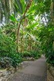 Belle exposition tropicale dans Palmengarten à Francfort Photos libres de droits
