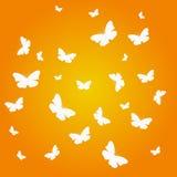 Belle farfalle Fotografia Stock Libera da Diritti