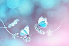 Belle farfalle blu bianche sui fiori di lavanda Immagine naturale della molla di estate nei toni blu e porpora immagini stock libere da diritti