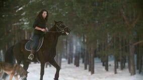 Belle femme à cheveux longs professionnelle montant un cheval noir par la neige profonde dans la forêt, étalon indépendant clips vidéos