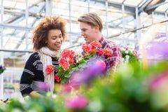 Belle femme achetant un pélargonium rouge au conseil d'un fleuriste photographie stock libre de droits