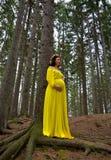 Belle femme enceinte photos stock