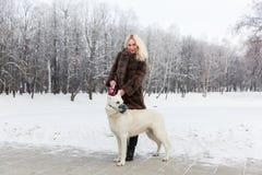Belle femme marchant avec le chien de berger suisse blanc en hiver Photo stock
