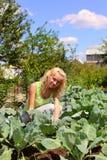 Belle femme sur un bâti avec le chou Photos libres de droits