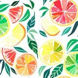 Belle fette arancio adorabili succose mature squisite saporite deliziose variopinte luminose del dessert di autunno di estate di  Fotografia Stock Libera da Diritti