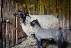 Belle feuille adorable dans la maison de ferme avec la mère Photo stock