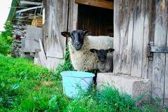 Belle feuille adorable dans la maison de ferme avec la mère Image libre de droits
