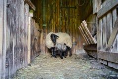 Belle feuille adorable dans la maison de ferme avec la mère Images libres de droits