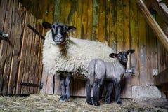 Belle feuille adorable dans la maison de ferme avec la mère Photos libres de droits