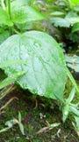 Belle feuille après pluie Photo libre de droits