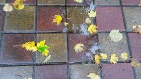 Belle feuille d'automne se trouvant sur le pavé humide Photo stock