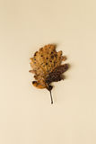 Belle feuille d'automne sur le fond en pastel Photographie stock