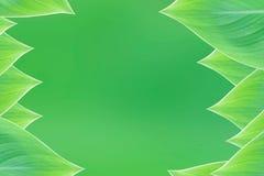 Belle feuille de vert de cadre de frontière de nature Photographie stock