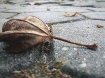 Belle feuille sèche et automne tombés images libres de droits