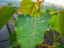 Belle feuille verte avec des gouttes de l'eau Images libres de droits