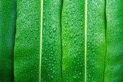 Belle feuille verte avec des gouttes de l'eau Image libre de droits