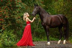 Belle fille blonde mince dans la robe rouge étreignant un cheval noir photos stock