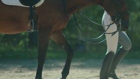 Belle fille conduisant un cheval dans la campagne Le cavalier de costume banque de vidéos