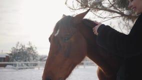 Belle fille touchant la crinière d'un beau cheval et des courses son museau sur un ranch en hiver Mouvement lent banque de vidéos