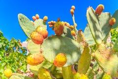 Belle fin d'usine de cactus avec le ciel bleu images libres de droits
