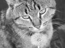 Belle fin de chat  images stock
