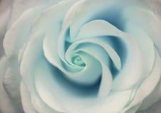 Belle fin de fleur rose d'aigue-marine avec la pâte sensible Image stock