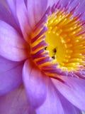 Belle fin de fleur vers le haut Photos libres de droits