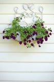 Belle fioriture porpora Fotografia Stock Libera da Diritti