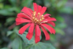 Belle fleur image libre de droits