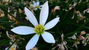 Belle fleur Image stock