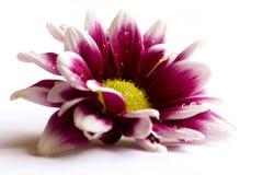 Belle fleur photo stock
