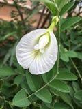 Belle fleur Photos stock