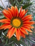 Belle fleur Photo libre de droits