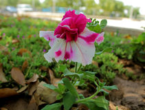 Belle fleur photos libres de droits