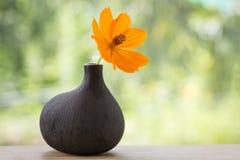 Belle fleur Images stock