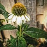Belle fleur Photographie stock