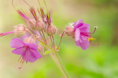 Belle fleur au printemps photographie stock