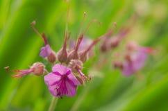 Belle fleur au printemps images stock