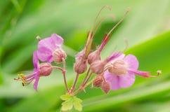 Belle fleur au printemps Photos stock