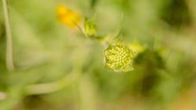 Belle fleur au printemps Image stock
