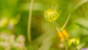 Belle fleur au printemps image libre de droits